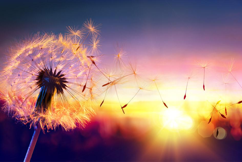 Create Your Wish
